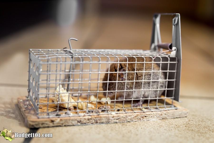 20+ Ways to Get Rid of Mice