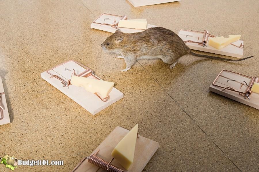 b101 20 ways get rid mice mousetraps