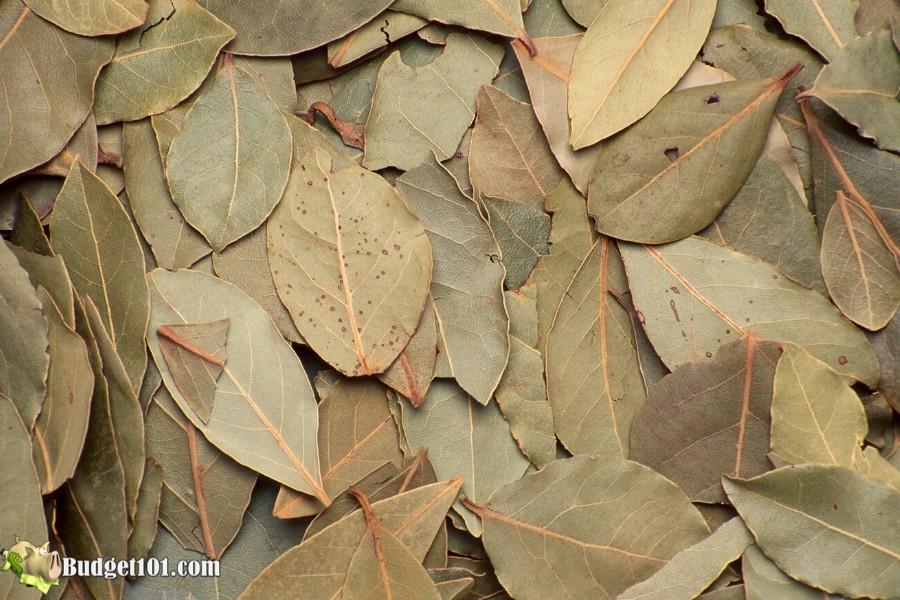 b101-bay-leaves