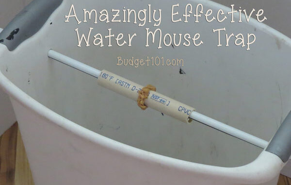 the ultimate bucket mouse trap