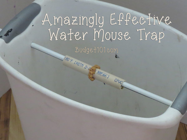the-ultimate-bucket-mouse-trap