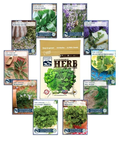 growing-herbs-during-winter-made-easy