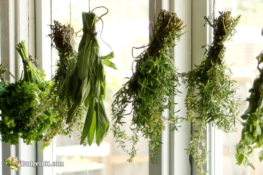 Dry herbs indoors