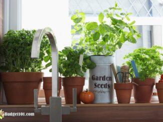 b101 grow herbs indoors