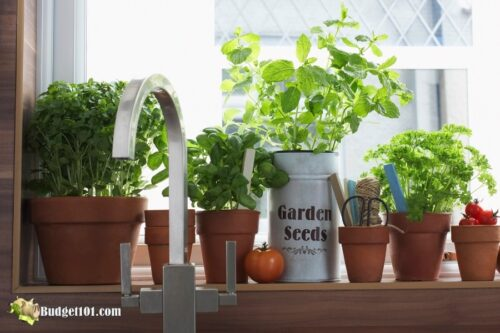 b101 grow herbs indoors