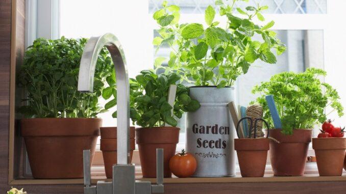 b101-grow-herbs-indoors