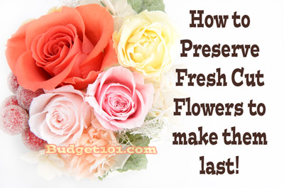 how-to-preserve-your-fresh-cut-flowers