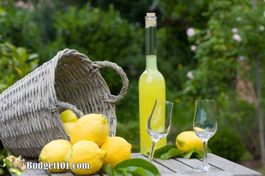 myo limoncello liqueur budget101