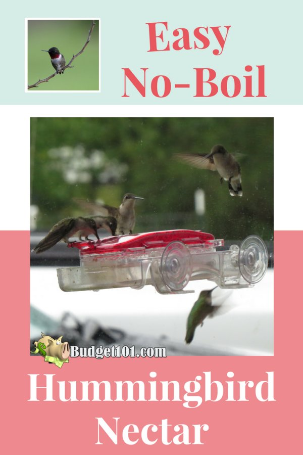 homemade-hummingbird-nectar-recipe
