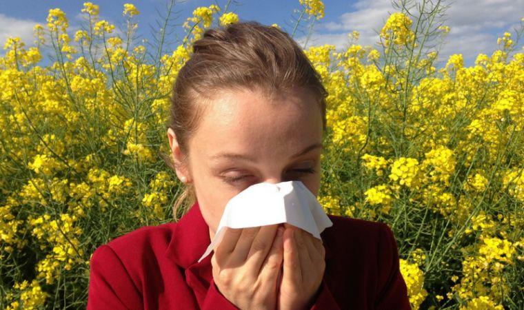 b101 hay fever