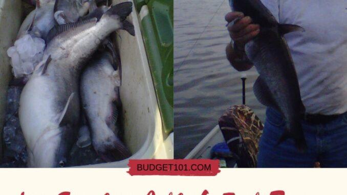 Liss-Surefire-Catfish-Bait-recipe
