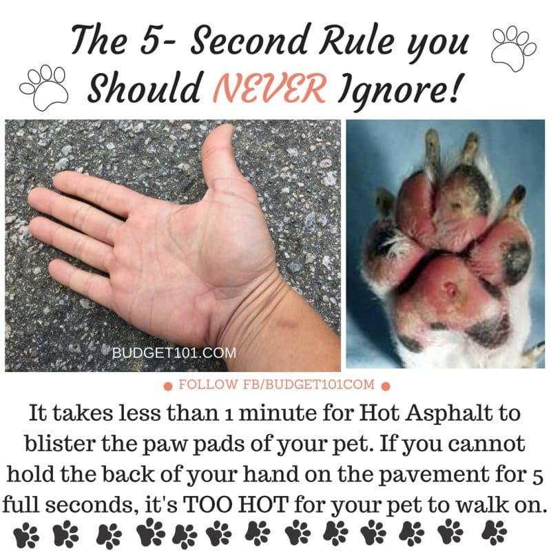 5-Second Rule for Dogs