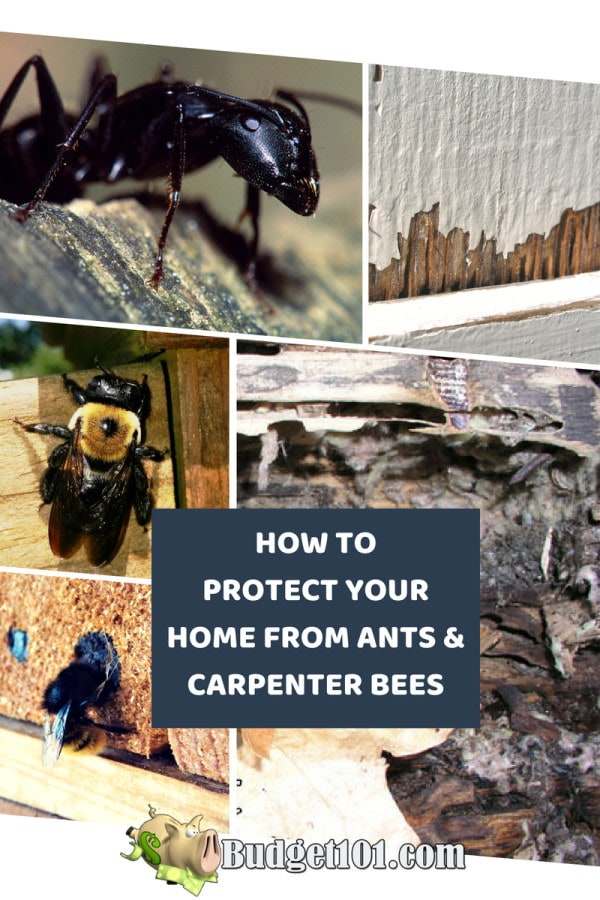 How to Protect your Home from Carpenter Bees