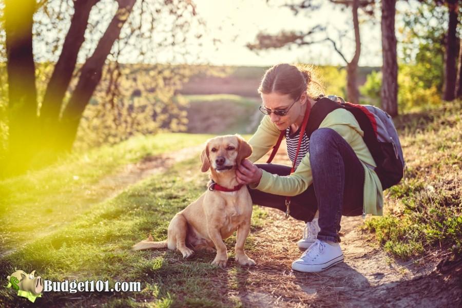Check your Pets for Ticks- Budget101.com