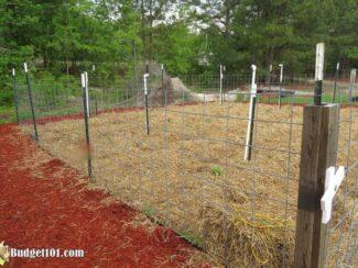 Adventures in Mound Gardening Part 2