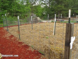 b101-mound-gardening-2