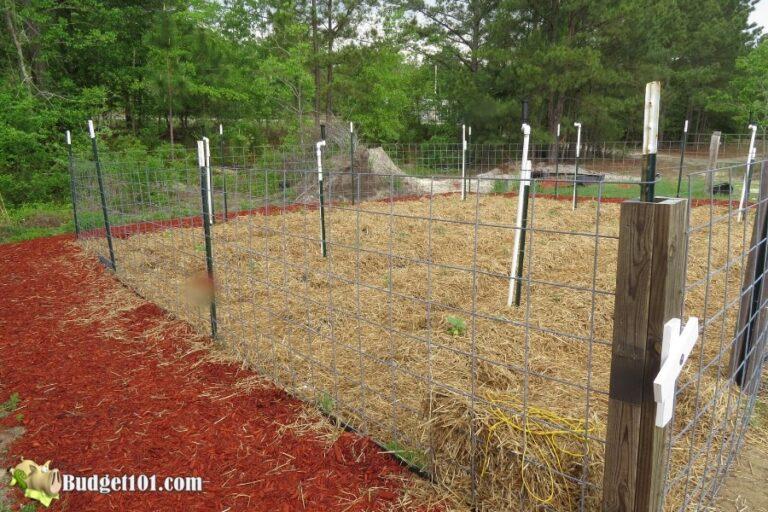 b101 mound gardening 2