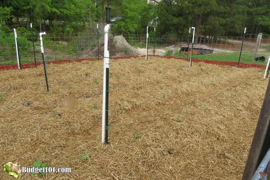 b101-mound-gardening-3