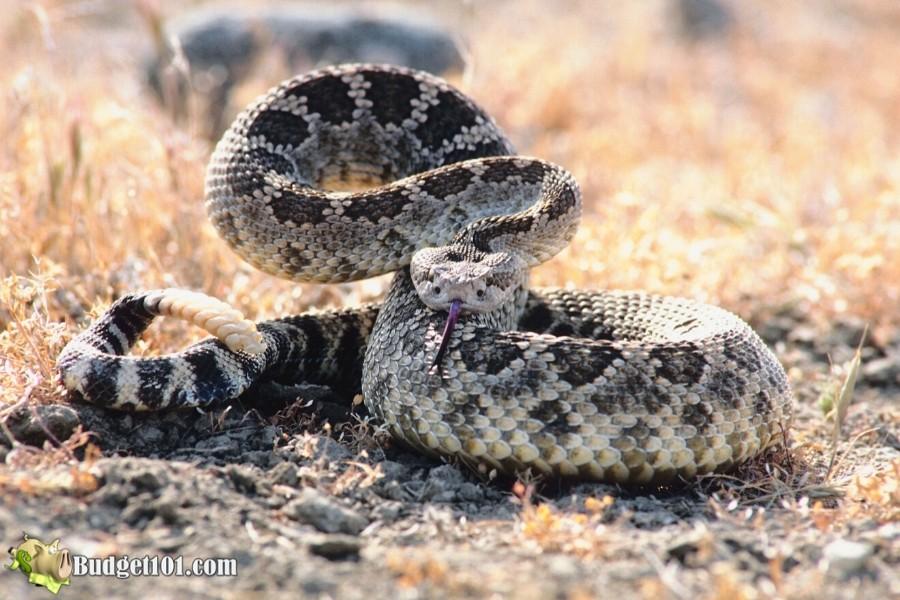 b101-mound-gardening-avoid-snakes