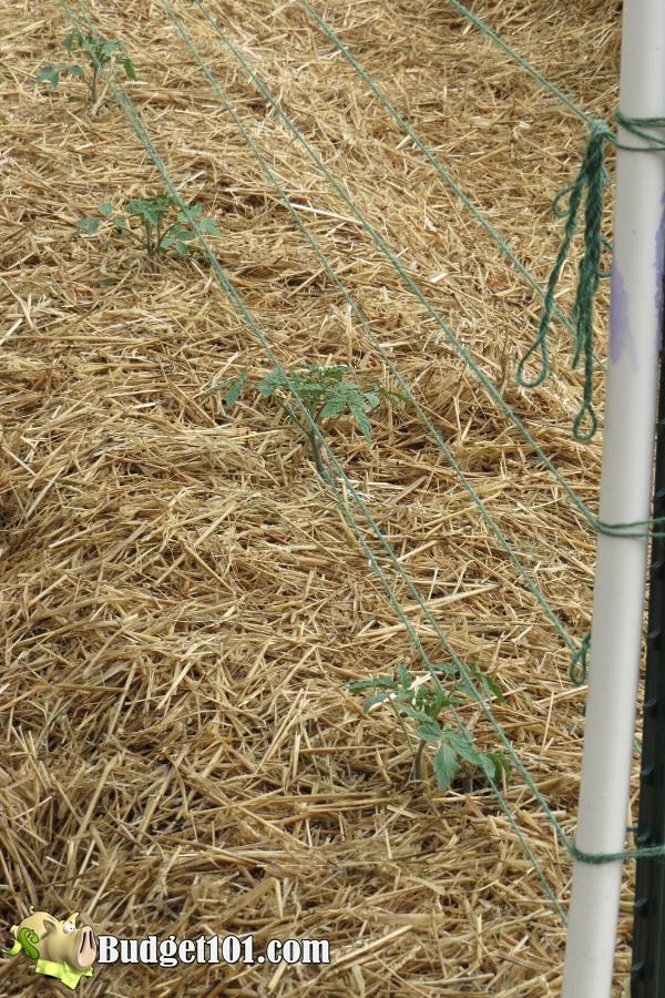 b101-mound-gardening-trellis