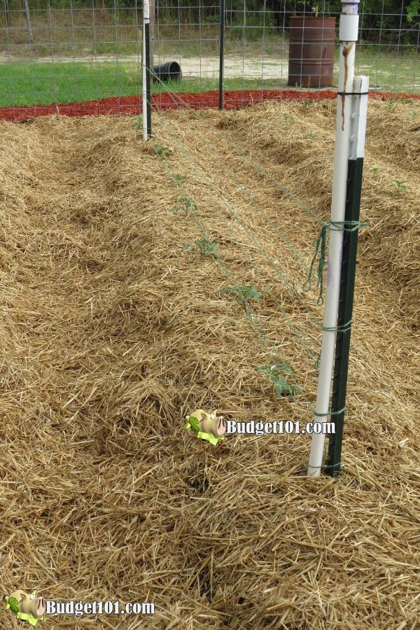 b101-mound-gardening-watering-system