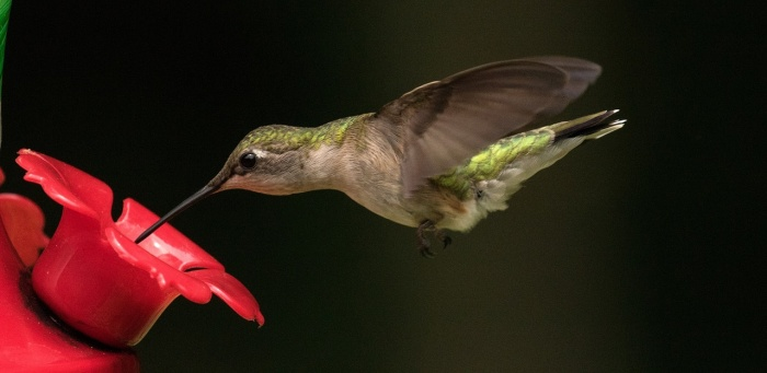 image relating to Printable Hummingbird Nectar Recipe named Hummingbird Nectar How towards create Do-it-yourself Hummingbird Meals
