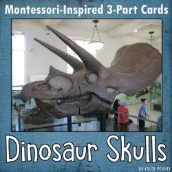 Dinosaur Skulls Matching Cards