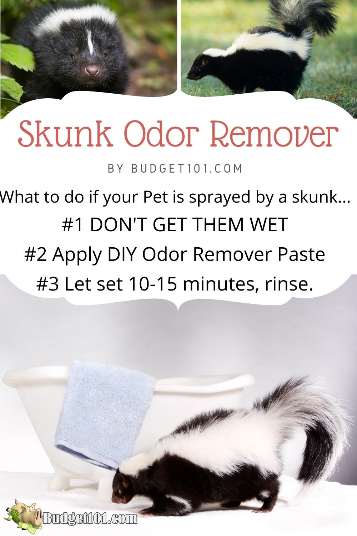 "Never attempt to ""rinse away"" skunk odor from a pet's fur. Here's a simple DIY Skunk Odor Remover paste that actually works! #Tipsntricks #Skunk #SkunkOdor #SkunkSpray #OdorRemover #Budget101"