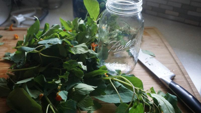 Homemade Jewel weed salve