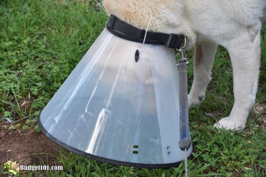 dog struggling plastic vet collar