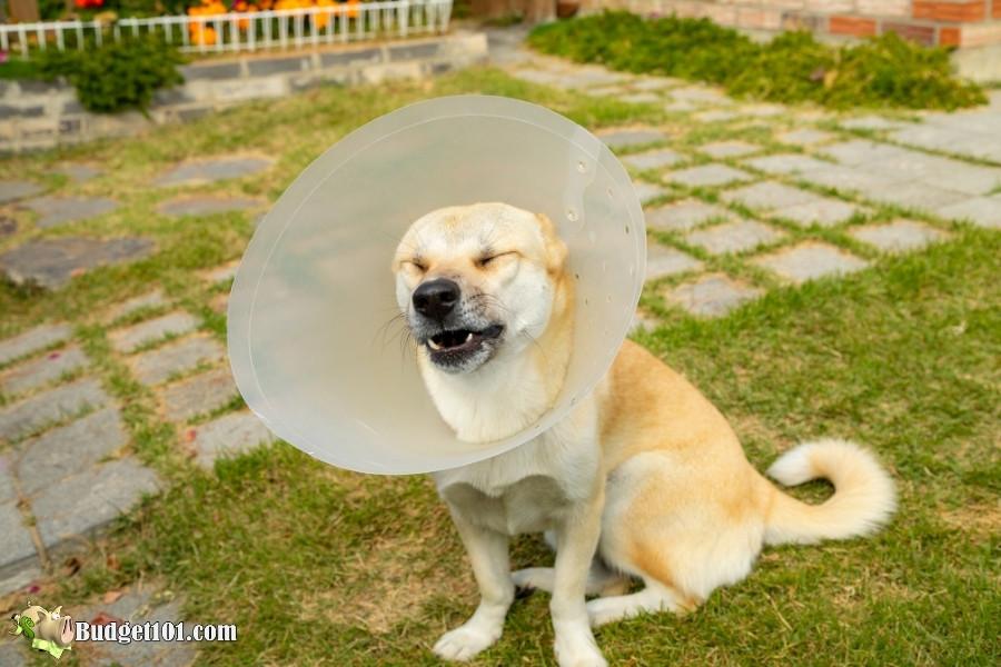 frustrated dog vet collar