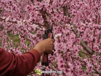 b101-how-to-prune-fruit-trees