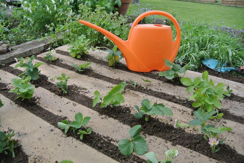 Pallet Garden Bed Ideas
