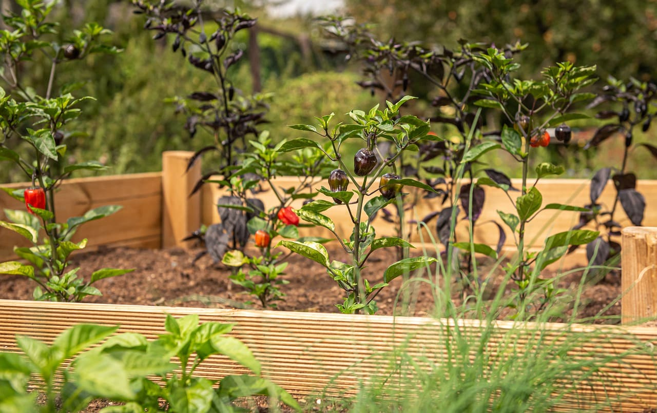5 Frugal Raised Garden Beds to Spruce up your Backyard