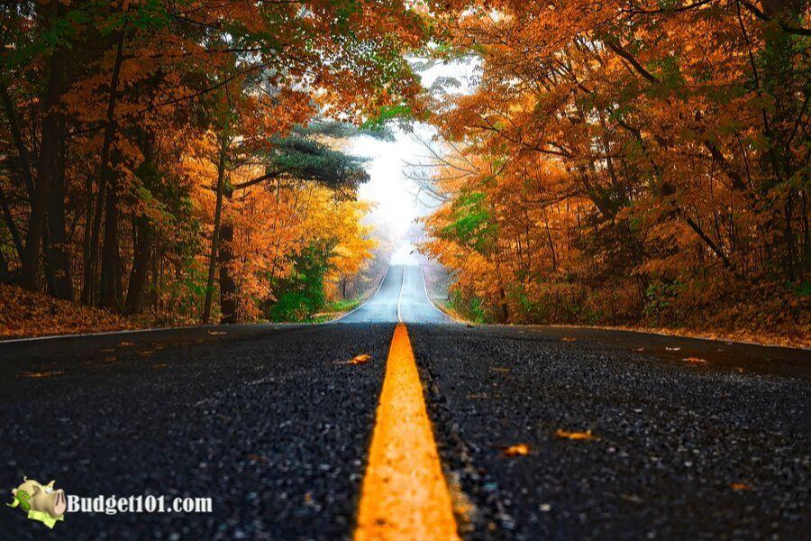 b101-50-fall-family-photo-ideas-foliage_leaves