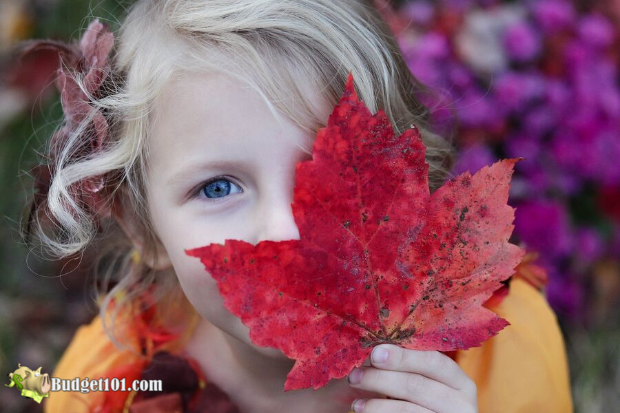 b101-fall-leaves
