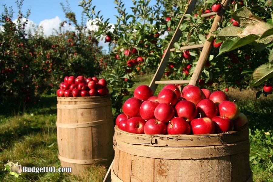 b101-picking-apples
