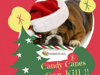 Candy Canes can Kill your Pet