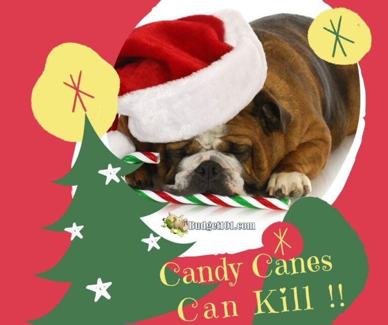 b101 candycanes can kill