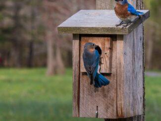 2020 01 24 5e2b234703f6b bluebirds 22