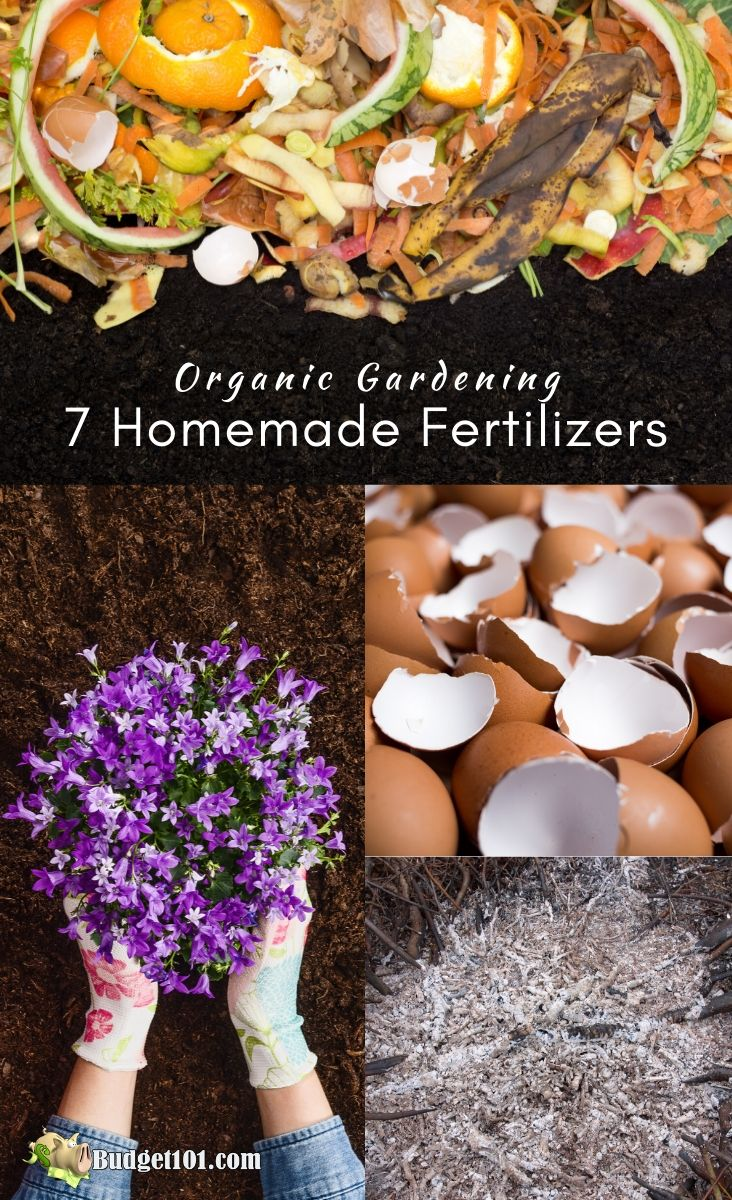 7 Homemade  Organic Fertilizers for a bountiful healthy garden, without spending money #Budget101 #homemadeFertilizer #naturalgardening #DIY