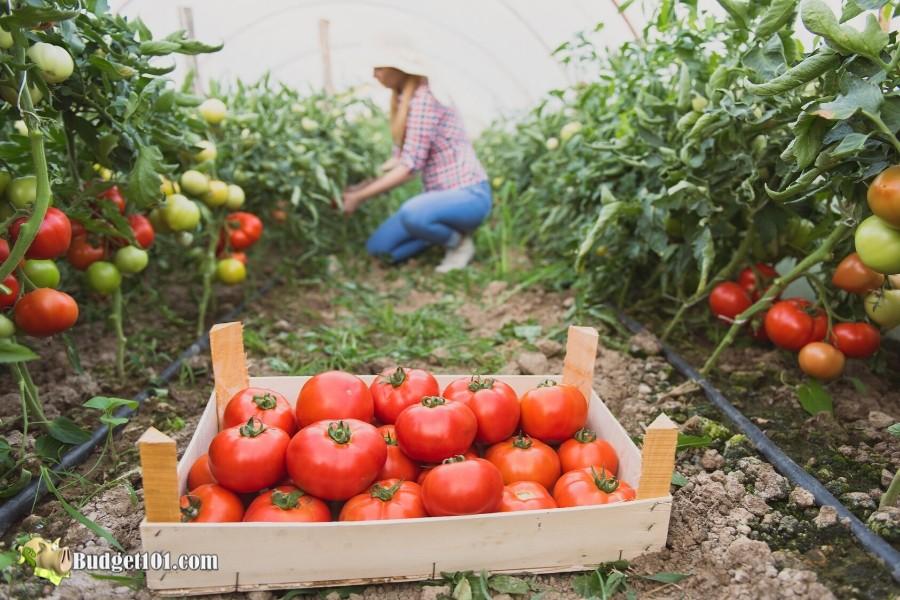 7 Homemade Fertilizers- Organic