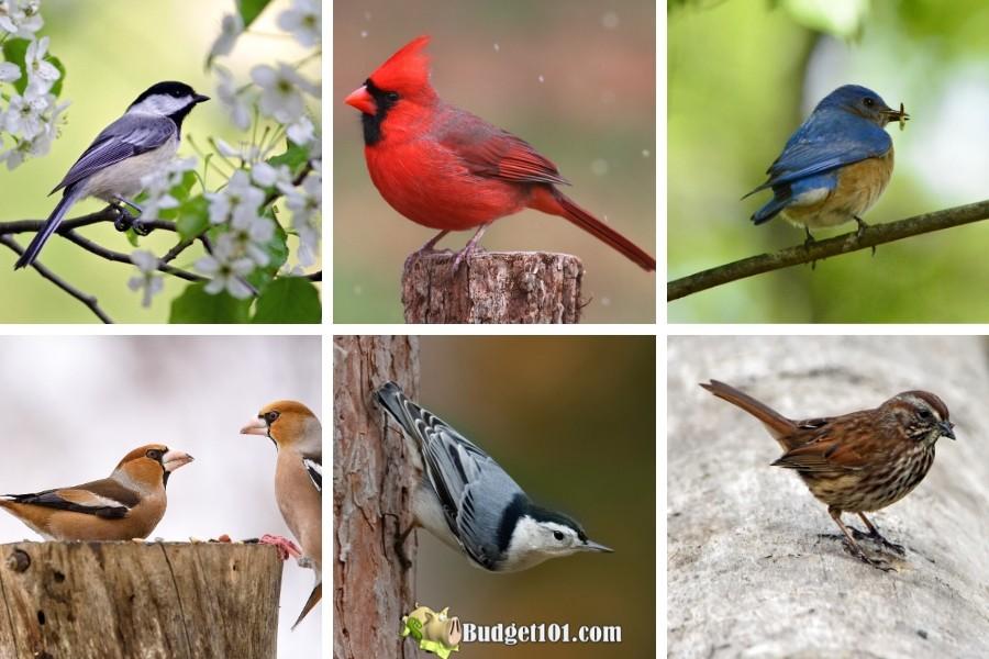 b101-best-pest-control-birds-natural-gardening