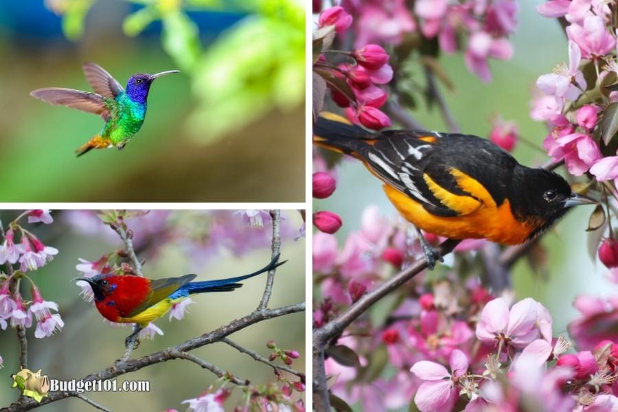 b101-best-natural-pollinators