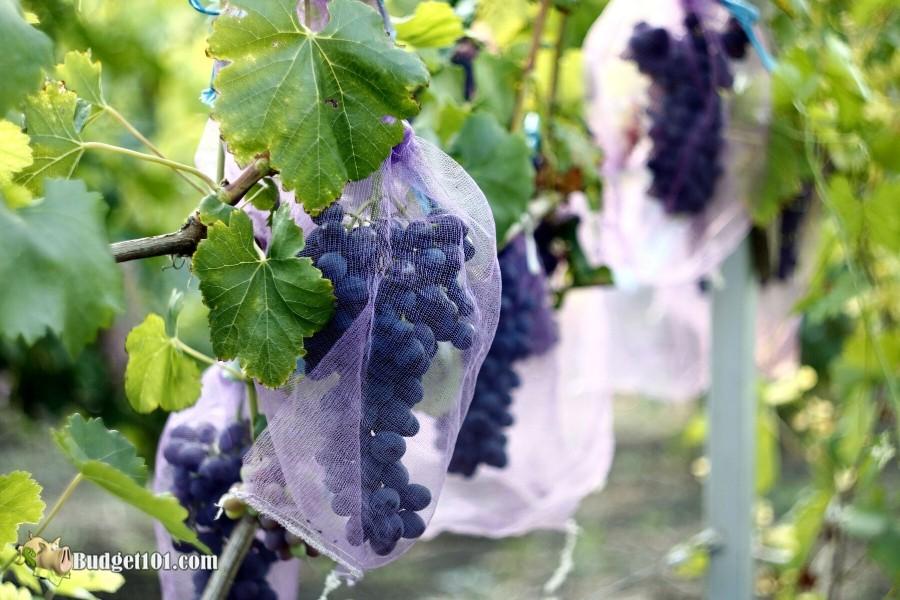 b101-protecting-garden-using-netting