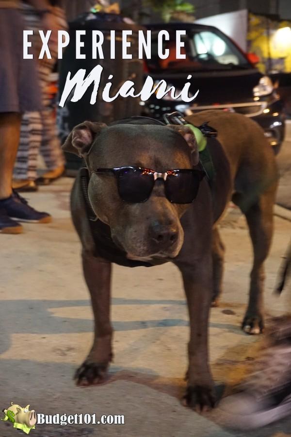 Experience Miami