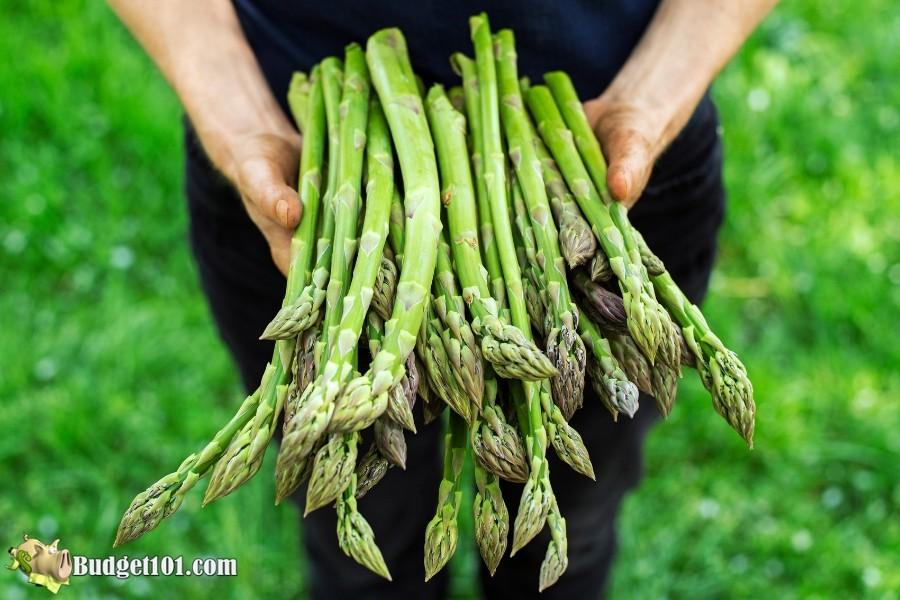 B101-asparagus-stalks