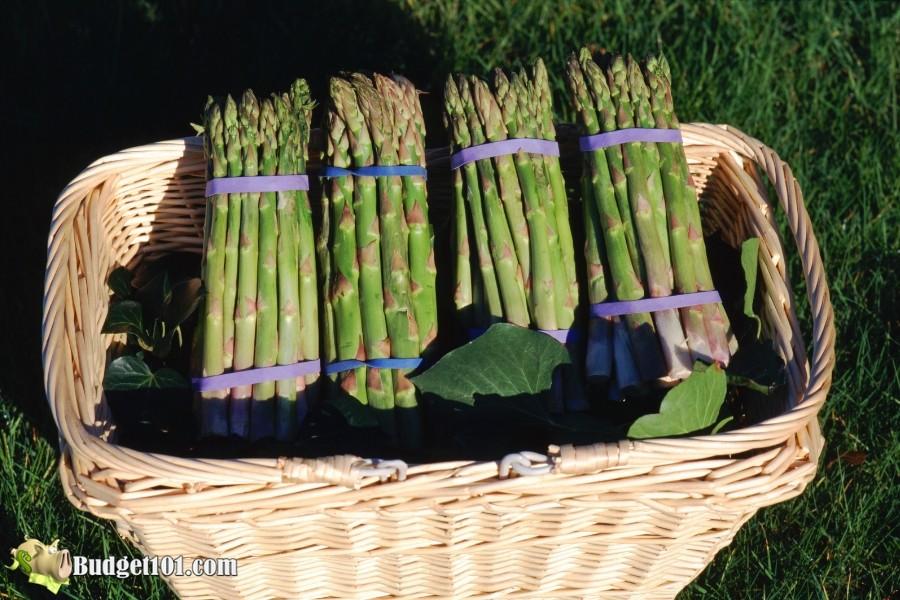 b101-fresh-asparagus
