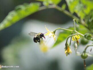 b101-organic-gardening-pesticides-2