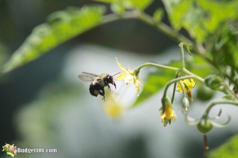 b101 organic gardening pesticides 2